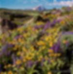 Mt Powell Wildflowers web.jpg