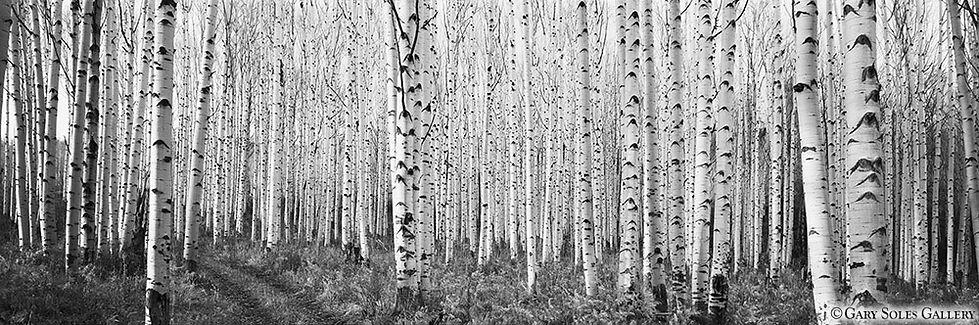 Black and White, Aspen, Aspen Road Panoramic, Gary Soles