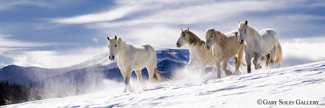 Dreamy Horse Pano