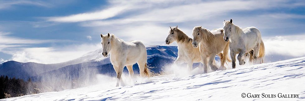 dreamy horses, horses in snow, winter horses, herd, horse, gary soles gallery