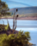 Double Eagle, eagles, green mountain resevoir, wildlife, birds of prey, birds, summit county, colorado, wildlife landscape