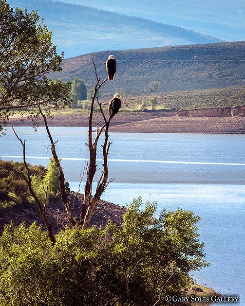 Double Eagle, eagles, green mountain resevoir, wildlife, birds of prey, birds, summit county, colorado, wildlife landscape