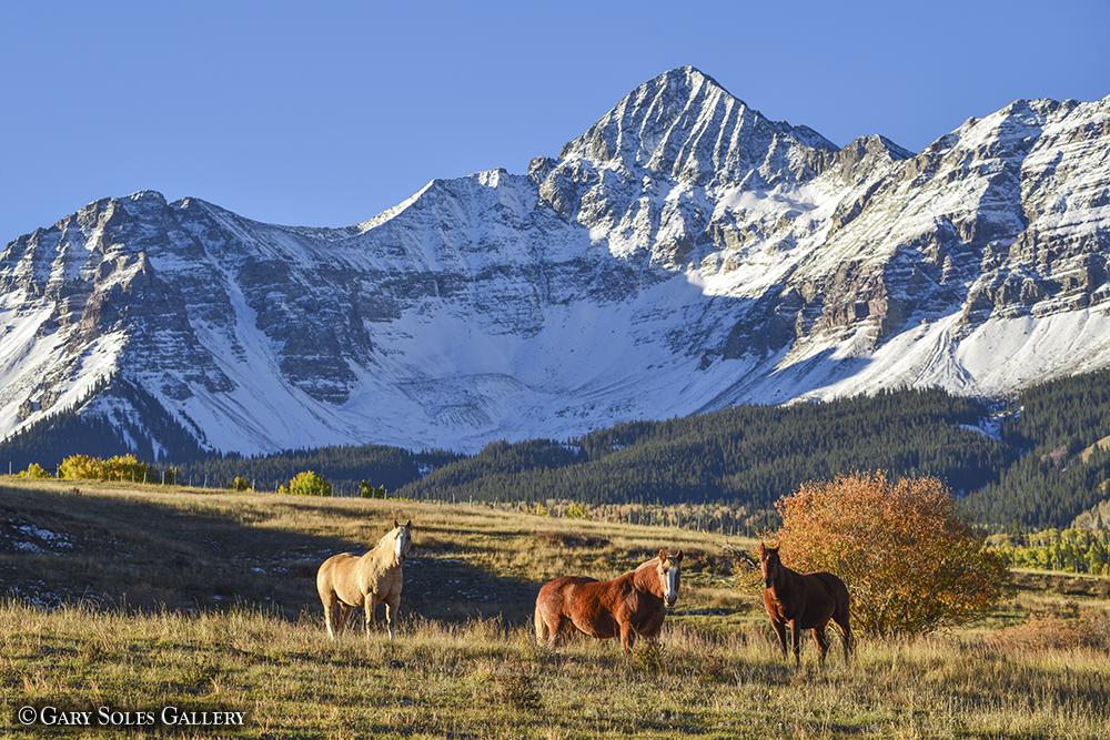 Mt Wilson Horses