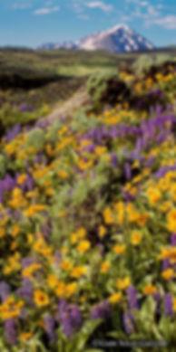 Mt Powell Wildflowers V1-2 web.jpg