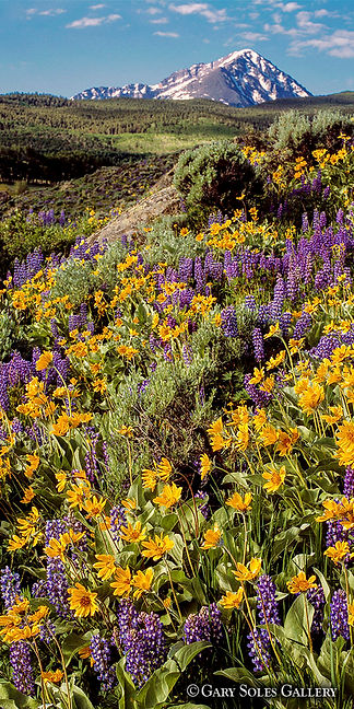 Mt Powell Wildflowers V1-2 web.jpg