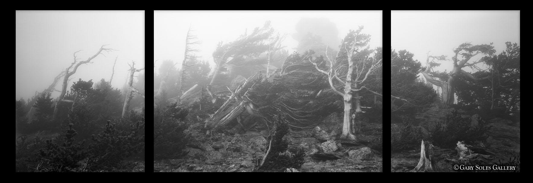 Bristlecone Storm trip