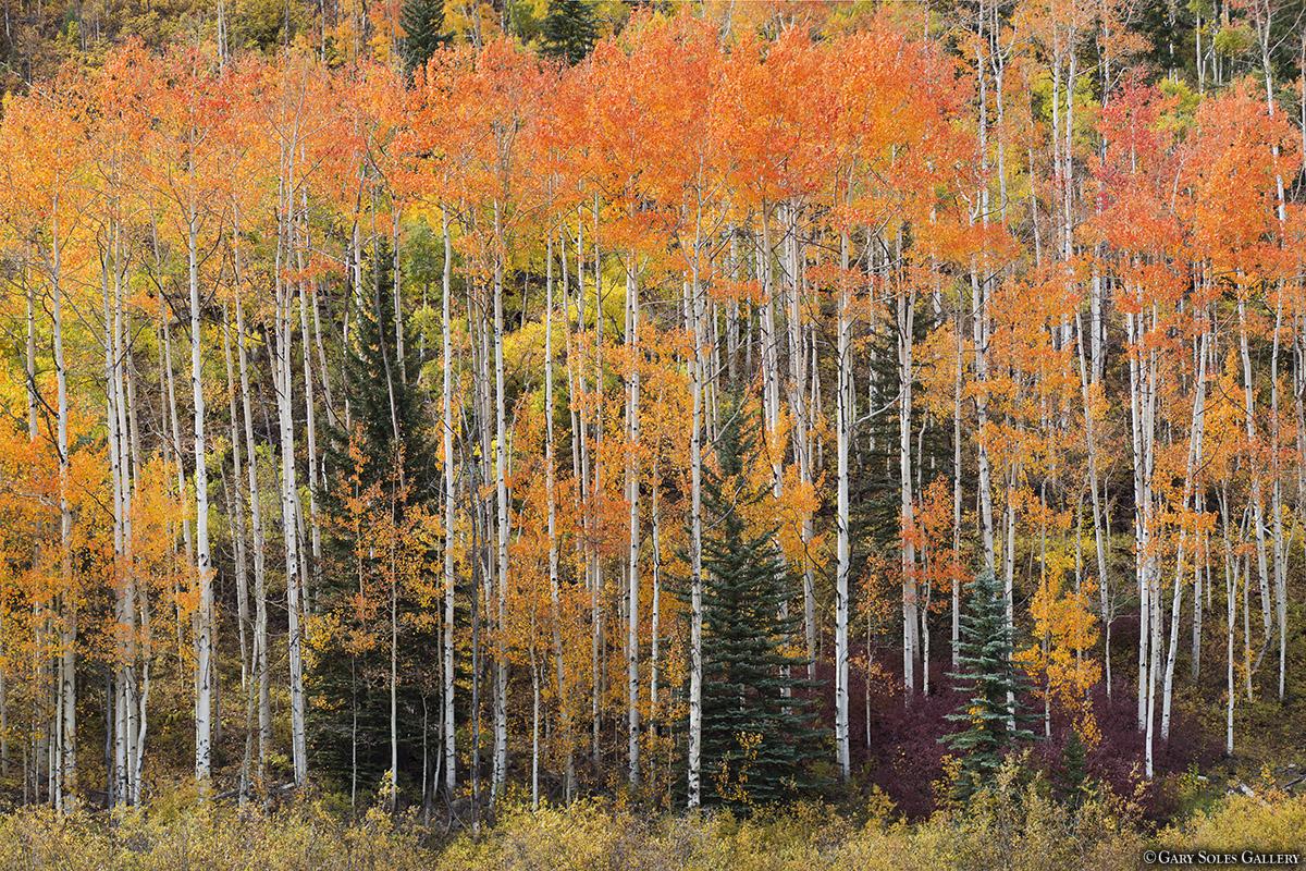 Purgatory Trees