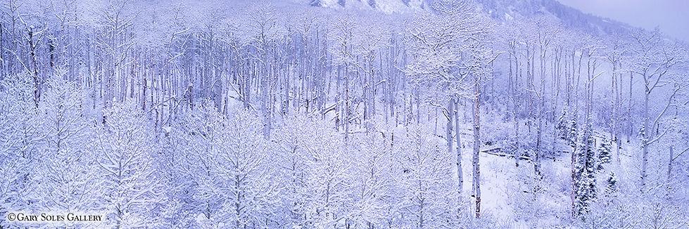 apen, winter, mcclur pass, colorado, gary soles, gary soles gallery, breckenridge, colorado
