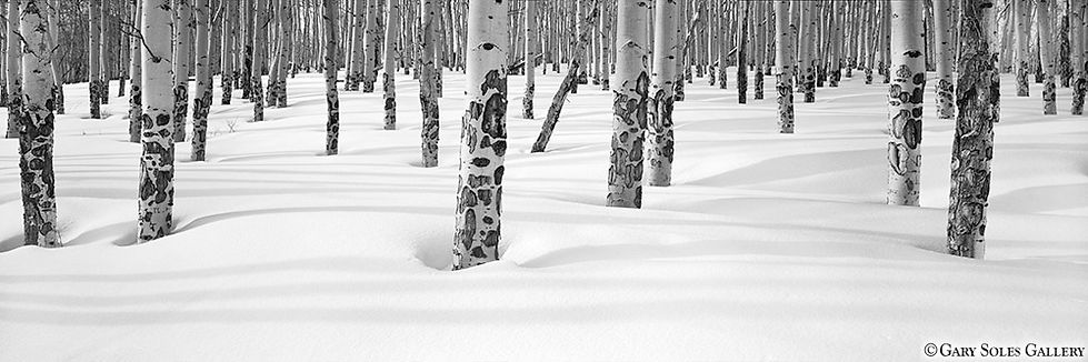 Aspen Shadows, Beaver Creek, Colorado, winter, snow, panoramic, film, print