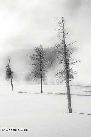 Misty Winter Pines.jpg