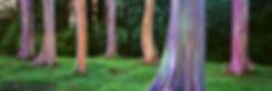 Rainbow Forest web.jpg