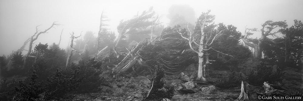 Bristlecone Storm