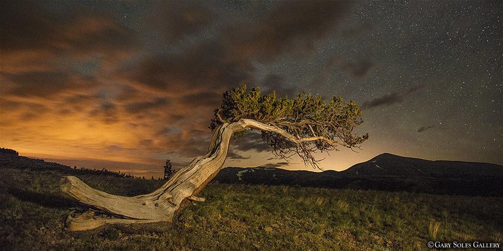 Lone Bristlecone Night
