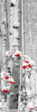 Snowberries BW Red Berries.jpg