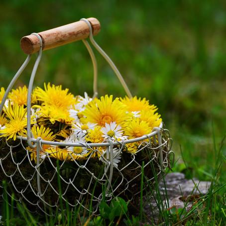Frühlingskräuter für dich und dein Tier