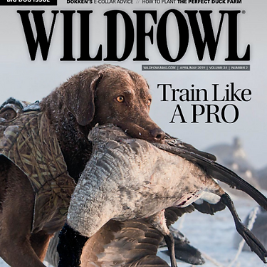 wildfowl mag pic.png