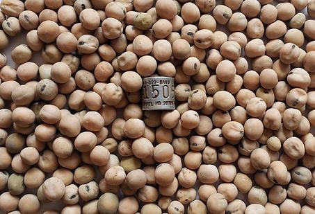hard pea seed