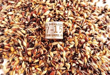 sudan seed