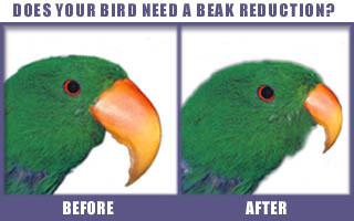 does your bird need a beak reduction?