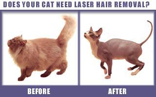 cat laser hair removal humor news