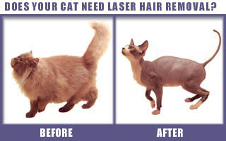 Cosmetic Surgery For Pets, Humor News