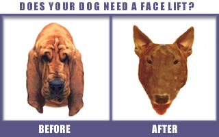 does your dog need a facelift?