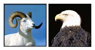 ram eagle car names humor news