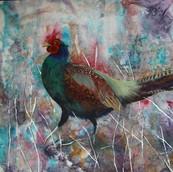 Strutting Cock Pheasant
