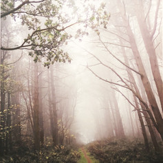 Seasons of Mist III