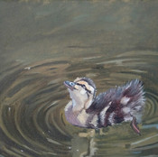 Duckling in Green Water I