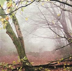 Seasons of Mist II