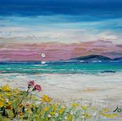 Beach & Machair Flowers, Isle of Coll