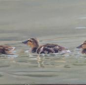 3 Ducklings