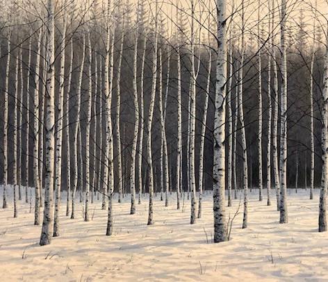 Birches at Daybreak