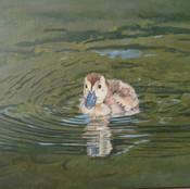 Ducking in Green Water II