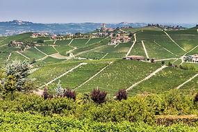 Piemont Barbaresco.jpg