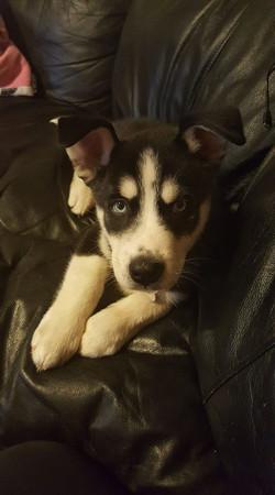 Ashley's Pup