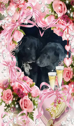 Bear and Princess