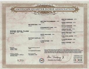 5-Scenic Royal Flush Registration.jpg