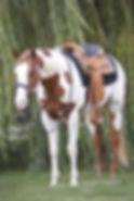 01-Rio saddle willow.jpg