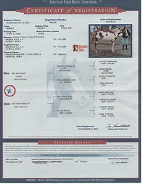 6-APHA Registration papers.jpg
