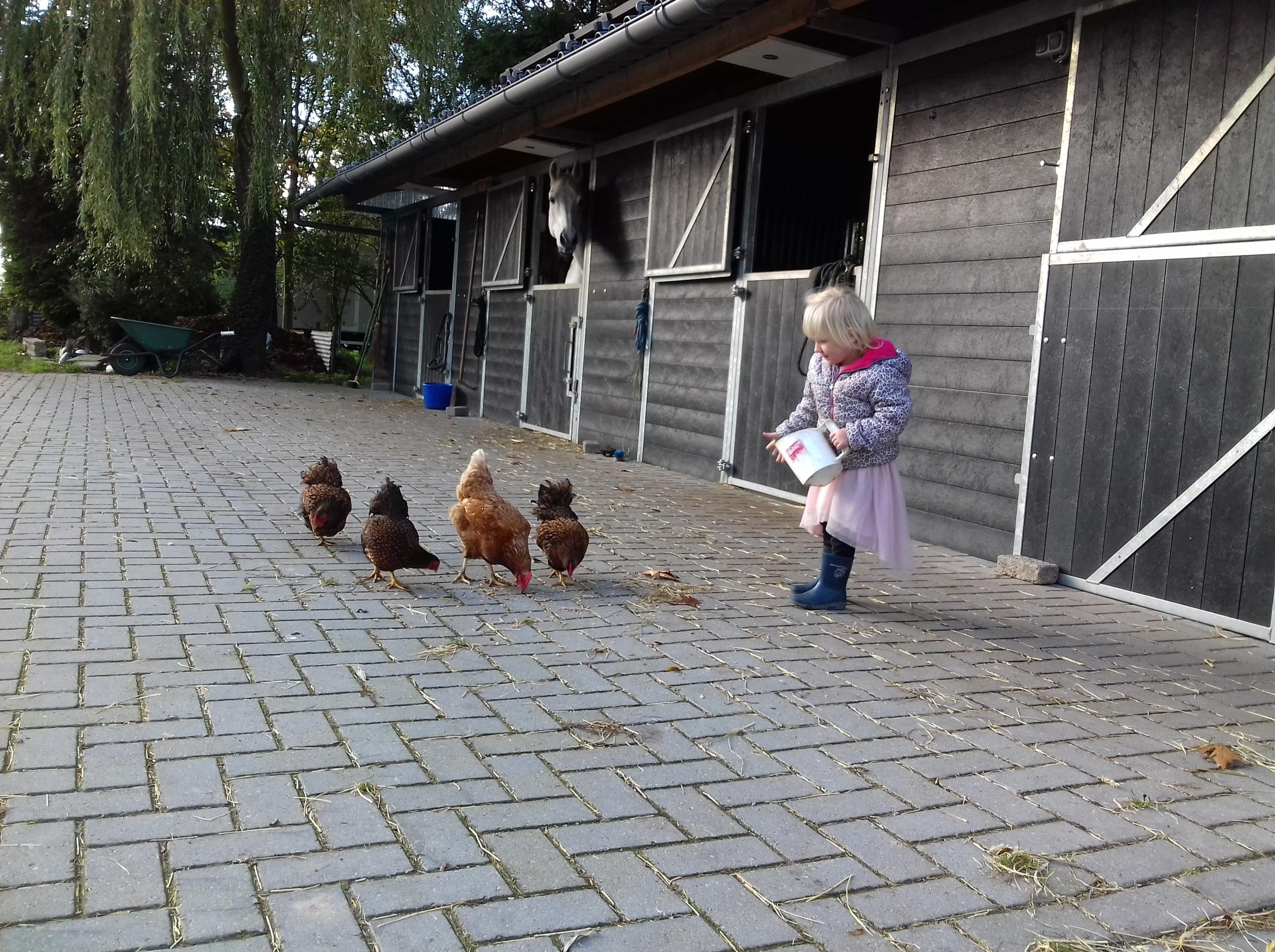 Stallen en kippen