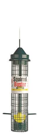 Squirrel Buster Finch