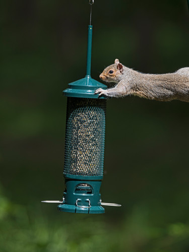 The Squirrel Buster
