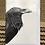 Thumbnail: 'Crow' Greetings Card