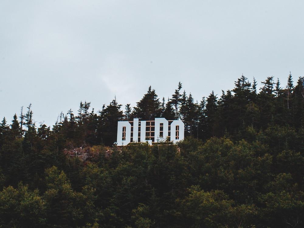 A guide to Dildos. All you need to know about dildos. Alora Dildos