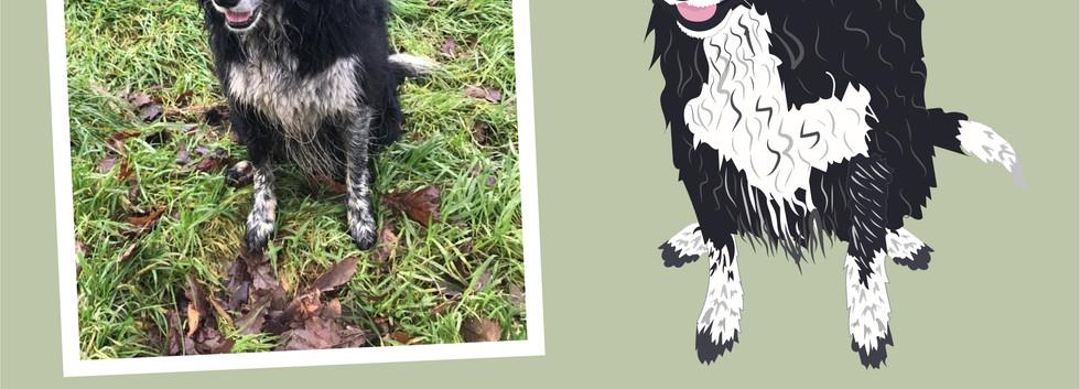 Pet portrait wix layout-06.jpg