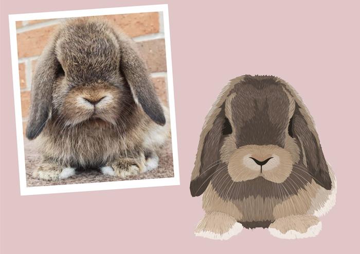 Pet portrait wix layout-22.jpg