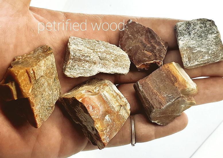 Rough Petrified Wood | Raw Petrified Wood
