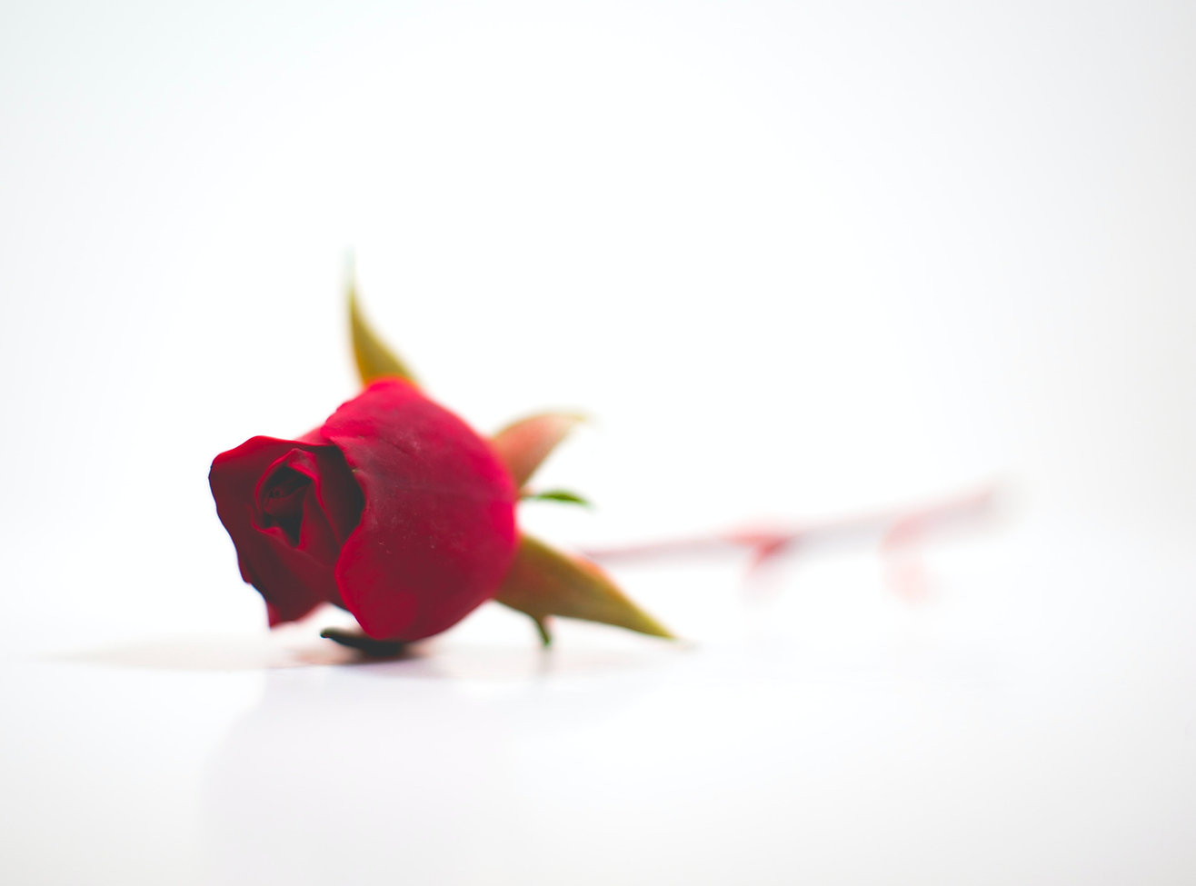 rose_mothers%20day_edited.jpg